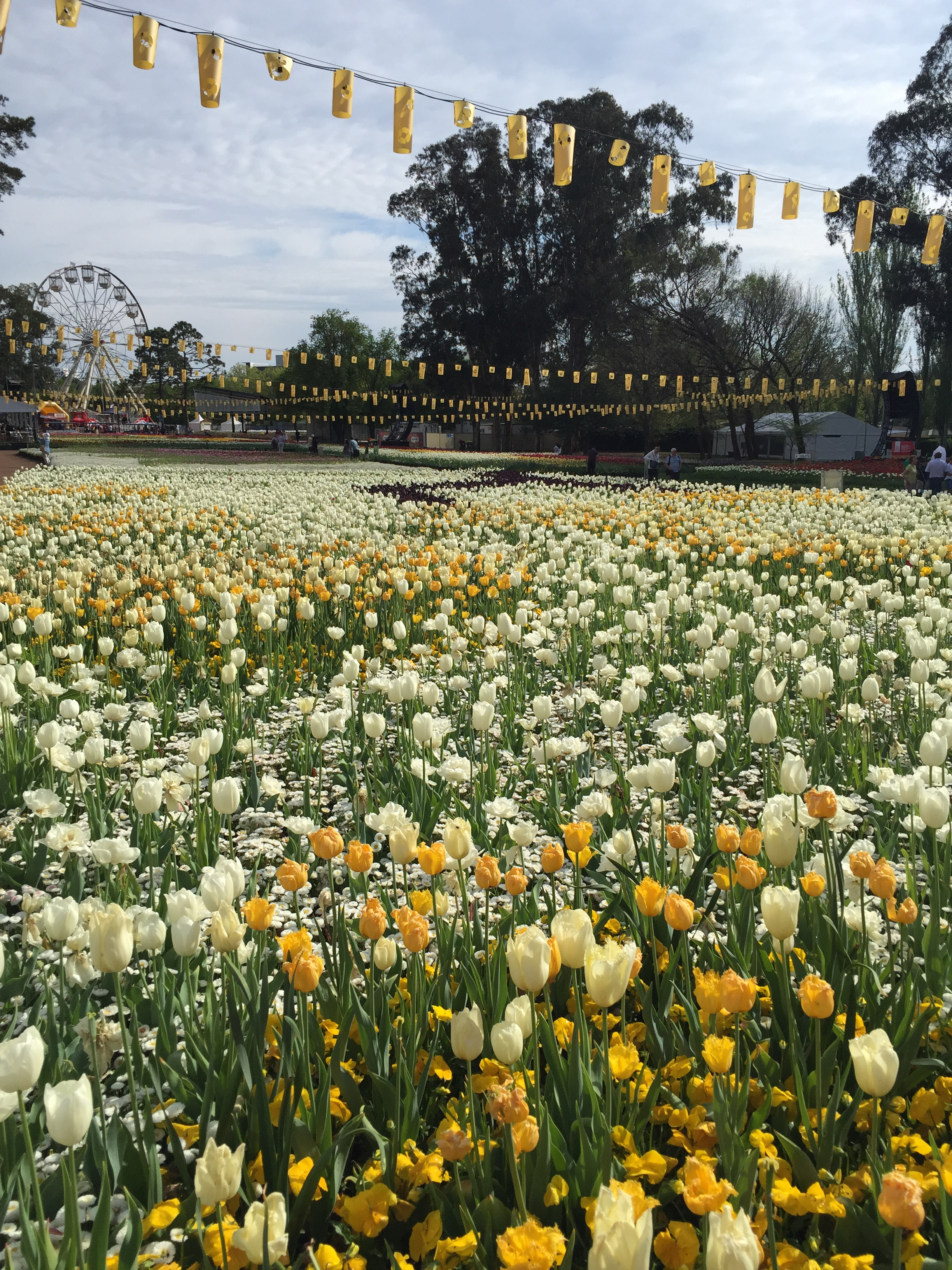 Floriade The Tulip Festival Canberra Act Australia October