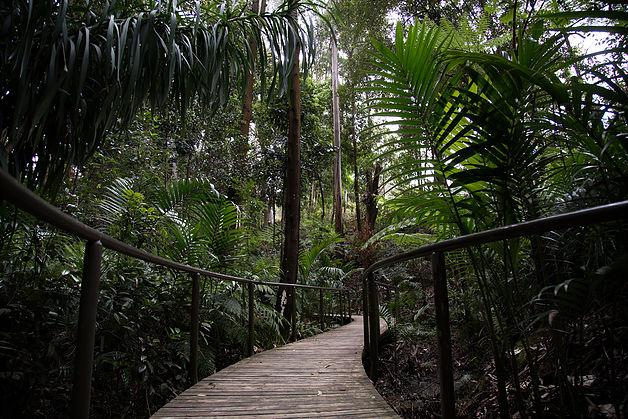 pollen rainforest walk