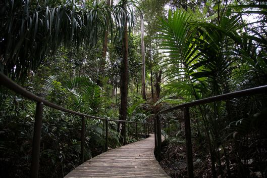 pollen rainforest walk